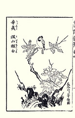 Kobus magnolia and yellow-throated bunting (Japanese Flower and Bird Art) Tags: flower bird art japan japanese book picture magnolia kano woodblock hasegawa bunting kobus nishimura elegans tohaku emberizidae magnoliaceae emberiza yellowthroated shigenaga readercollection