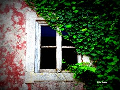 Janela do passado (verridrio) Tags: red house green texture abandoned window ventana casa flora fenster sony ruine finestra janela  fentre hx ruinen abandono autofocus textur  aufgabe  consistenza omot