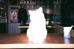 SML_160420_NATURA_0013 ( Sean Marc Lee ) Tags: white kitten natura 1600 fujifilm murakami harukimurakami ghostcat murakamiharuki moet barcat