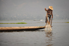 Inle Lake - Fisherman (Nicholas Olesen Photography) Tags: travel lake man net tourism water horizontal work person boat fishing fisherman nikon asia day outdoor burma labor rowing myanmar inle southeast d90
