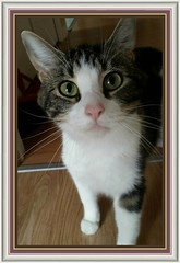 How are you? (Lise ) Tags: white friend animaux 00241 photocat