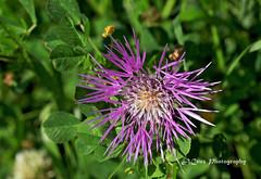 Pink Flower (nitehawk) Tags: pink macroflowers