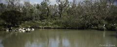 _DSC0364 (chris30300) Tags: france heron de pont parc oiseau camargue gau saintesmariesdelamer flamant provencealpesctedazur ornithologique