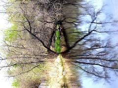 nature (FabienA380) Tags: lake canada reflection tree edmonton pentax lac alberta arbre ricoh reddeer wg3