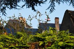 DSCF0606 (kuzdra) Tags: france spring village anjou   dene