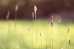 spring (Bea Burin-Herbst | Fotografie) Tags: light nature licht spring dof bokeh natur 85mm sonne frhling sonnenschein