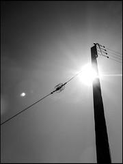 20130719-968 (sulamith.sallmann) Tags: bw france backlight frankreich energy europa energie direction electricity sw normandie strom manche fra gegenlicht stromversorgung richtung elektrizitt strommast lahague bassenormandie aufwrts energieversorgung dielette sulamithsallmann freileitungsmast