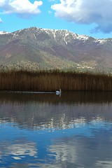 Pelican swimming in the lake by ioanna papanikolaou DSC_1352_2758 (joanna papanikolaou) Tags: travel lake mountains reflection nature clouds reflections reeds landscape scenery natural scenic scene pelican greece destination scape lakescape prespes lakescenery