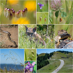 The First of May (pixelmama) Tags: ladybug marincounty wildflowers bobcat coastaltrail mounttam mounttamalpais millvalley gartersnake westernfencelizard thefirstofmay bolinasridgetrail