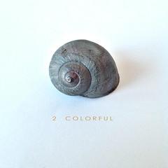 """2 Colorful"" Colored Snail Shell (S N A I L I C I O U S) Tags: inspiration snails soe autofocus snailshells snailicious  infinitexposure  snailiciousnet snailsinsight insight  2colorful"