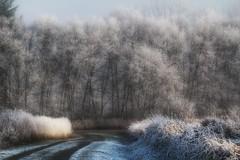 Frosty Morning at Deer Lake Park (Rosey-Noelle) Tags: frost hoarfrost burnaby deerlakepark canonsl1 frostypaths