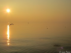 Sunset (LuisaLuisa) Tags: light sunset sky italy orange lake color reflection colors birds lago garda italia tramonto colours uccelli cielo colori riflessi luce arancione lakegarda gardalake lagodigarda riflesso veneto lazise northernitaly