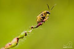 Natureza (angela.macario) Tags: macro nature brasil natureza inseto mato goiânia goiás macrophotography macrofotografia ângela macário
