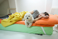 IMG_8554 (Two people two cameras) Tags: morning sleeping dog man home animal canon photography photo bed bedroom holidays colorful indoors poodle safe belgrade relaxed frenchpoodle