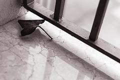 Lo que trajo el viento (Juuso34) Tags: blackandwhite white house black blur hoja blancoynegro window field ventana grid reja casa leaf depthoffield desenfoque duotone marble depth reflejos marmol profundidaddecampo duotono d3200