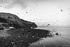 Gulls (Roj) Tags: uk sea blackandwhite bw seagulls monochrome wales landscape mono seaside lowlight llandudno greatorme northwales llandudnopier gogleddcymru canon5dmkii canonef24mmf14liiusm originalphotographer photographersontumblr sourcerojsmithtumblrcom