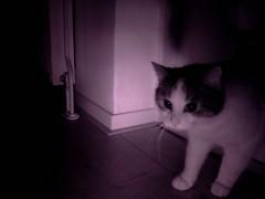 20160208-011251-i-1 (Catflap central) Tags: camera dog pet cats woof cat pi raspberry meow doggie catdoor catflap kattenluik katzenklappe catflapj2nnl taggingasdoguntilautotagginghasanoptout robotaggingisthedevil