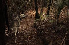 IMG_1454 (familynotblood) Tags: trees newzealand dog tree dogs nature forest bush nz bushwalk dogphotography