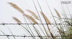"""Vallar el viento (""""CGGS Photography"""" on Facebook) Tags: plants naturaleza nature photography libertad freedom nikon plantas photographer free prison fotografia prision libre prisoner fotografo fotografa lockedup imprison prisionero airelibre encerrado d90 aprisionado cggs nikond90"""