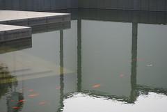 DSC_0689 (diqktixb41) Tags: lake water museum reflections town suzhou carps 苏州 pei