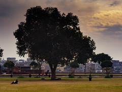 Winter sunset (Saifuddin Abbas) Tags: trees winter pakistan sunset green lahore