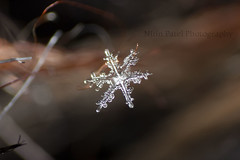 IMG_8666 (nitinpatel2) Tags: snowflakes patel nitin