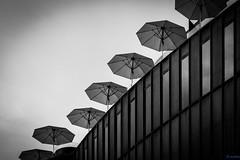 umbrellas (desmokurt1) Tags: street bw umbrella restaurant schweiz switzerland downtown fuji suisse zurich terrasse kaffee sw zrich dach schirme zurigo sonnenschirme dachterasse modissa fujixt1 kurtessler