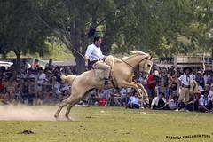 Jineteada 2_2 (pniselba) Tags: horse criollo caballo buenosaires gaucho tradicion provinciadebuenosaires sanantoniodeareco areco jineteada diadelatradicion