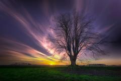A tree on a field (radonracer) Tags: tree landscape sonnenuntergang wolken gras landschaft sonne baum stimmungsvoll fleuth boeckelt