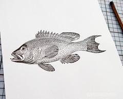 carving_a_fish_stamp4724.jpg (KristinaMariaS) Tags: printing stempel stampcarving handcarvedstamp drucken stempeln amliebstenbunt kristinaschaper