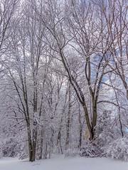 DSC01603-2 (johnjmurphyiii) Tags: winter usa snow connecticut shelly cromwell originaljpeg johnjmurphyiii 06416 sonycybershotdsch90