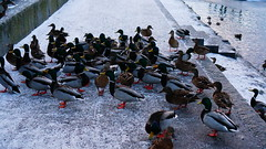 The Birds/Fglarna (annesjoberg) Tags: film birds title nder filmtitle fglarna filmtitel fotosondag fs160214