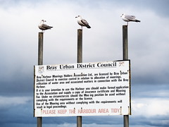 (turgidson) Tags: road ireland urban 6 birds sign strand studio lens four harbor raw zoom harbour district seagull gull olympus x telephoto developer micro pro council perched wicklow f28 bray omd thirds vario laridae m43 silkypix strandroad em5 35100mm 35100 mirrorless microfourthirds brayurbandistrictcouncil olympusem5 olympusomdem5 panasonic35100 panasoniclumixgxvario35100mmf28 hhs35100 silkypixdeveloperstudiopro6 p2112100