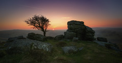 Saddle Tor [Explored 14/03/2016] (Nickerzzzzz - Thanks for stopping by :)) Tags: ©nickudy sky sun grass hawthorn tree rock tor granite dartmoor canon 5d3 5dmkiii colour photograph 1635mmf4lisusm sunset explored