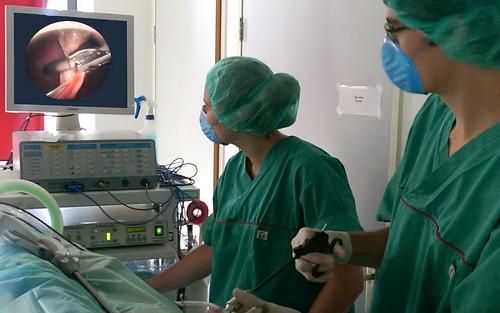laparoscopie Kliniek voor dieren Woerden