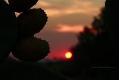 FICHI D'INDIA AL TRAMONTO (Aristide Mazzarella) Tags: sunset silhouette canon tramonto photographer sunsets tramonti salento fotografo fico aristide fichi dindia nard mazzarella