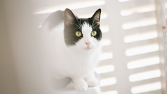 Cat (CarmenGallego) Tags: pet white cold cute cooking cat canon fun furry funny day photographer sweet designer weekend awesome galeria free honey gato 7d meaw purry seew canon7d yongnuo
