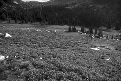 Alpine Heather Meadows Wallowa Mountains 3 - Oregon BW (Don Thoreby) Tags: woman oregon reflections walking highlands solitude hiking meadows trails peaceful backpacking serenity remote hiker peaks forests chiefjoseph strolling unspoiled usforestservice wallowamountains eaglecap northeasternoregon highridge eaglecapwildernessarea lonewoman alpineheather granitepeaks wallowawhitmannationalforest nezperceindians chiefjosephcountry alpineheathermeadows