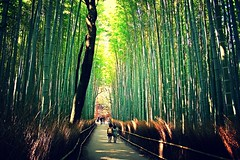 Big bamboo (__Thomas Tassy__) Tags: road camera city trip travel trees vacation holiday color tree green art nature beautiful japan canon wow wonderful outside photography eos 350d town photo amazing nice fantastic kyoto asia photographer shot superb artistic grove gorgeous awesome great picture atmosphere pic visit bamboo best bosque abroad promenade stunning moment capture arbre beau magnifique ville bambou splendid prise joli meilleur marvellous dehors genial grandiose splendide
