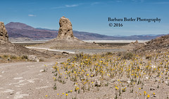 Wildflowers at the Pinnacles (RedHatGal: Barbara Butler/FireCreek Photography) Tags: road ca usa mountains southwest rain landscape sand rocks desert outdoor hills rockformations ridgecrest trona yellowwildflowers tronapinnacles redhatgal barbarabutlerphotography friecreekphotography