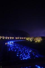 20160305-DSC_2267.jpg (d3_plus) Tags: street sea sky plant flower nature japan spring nikon scenery nightshot cloudy bloom  cherryblossom  sakura lightup nightview 28105mmf3545d nikkor    shizuoka    izu   28105   rapeblossom    28105mm  zoomlense  minamiizu    kawazuzakura    28105mmf3545 d700 281053545  nikond700 shimokamo aiafzoomnikkor28105mmf3545d nightcherryblossom 28105mmf3545af    southcherryblossomandrapeblossomfestival aiafnikkor28105mmf3545d shootingstarsandsakurainnight sakurainnight
