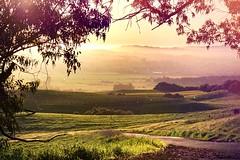 Wine Country Fog (Starrgalla) Tags: california mist mountain green grass fog view hills valley sonomacounty sunrays winecountry valleys grassy greenerpastures winecountryfog