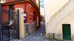 Cinque Terre (Finally, Sunday!) Tags: travel winter italy cat seaside alley europe outdoor redhouse unesco panasonic genoa genova cinqueterre february italie