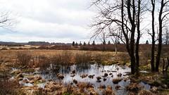 Fagnes - 11 (Ld\/) Tags: water spring belgium belgique belgie venn avril hoge monschau fagnes hautesfagnes 2016 venen eupen hohes waimes brackvenn