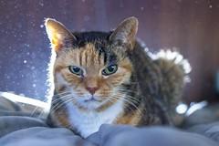 My BabyCat! (JIMMY Q2) Tags: portrait pet cat photography little jimmy beastie babycat q2