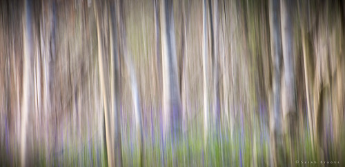 Bluebell Abstrct #2