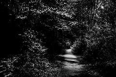 (Nico_1962) Tags: leica trees bw tree 35mm bomen zwartwit path pad nederland thenetherlands mysterious zwolle overijssel summarit m240 leicam mysterieus