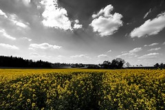 If life is gray, look at the yellow fields (Gerd Kozik) Tags: life sky color weather yellow clouds dark spring heaven gray fields emotions yarinasanth gerdkozik