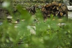 wood (RenField - Toel-ul Laputa) Tags: wood green nature japan sigma kagoshima    kyusyu merrill foveon   dp2   sigmadp2merrill