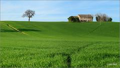 campagna di Recanati (Luigi Alesi) Tags: italy verde green primavera nature grass landscape countryside spring scenery italia country natura campagna erba fujifilm albero recanati marche paesaggio scenics casolare macerata xm1